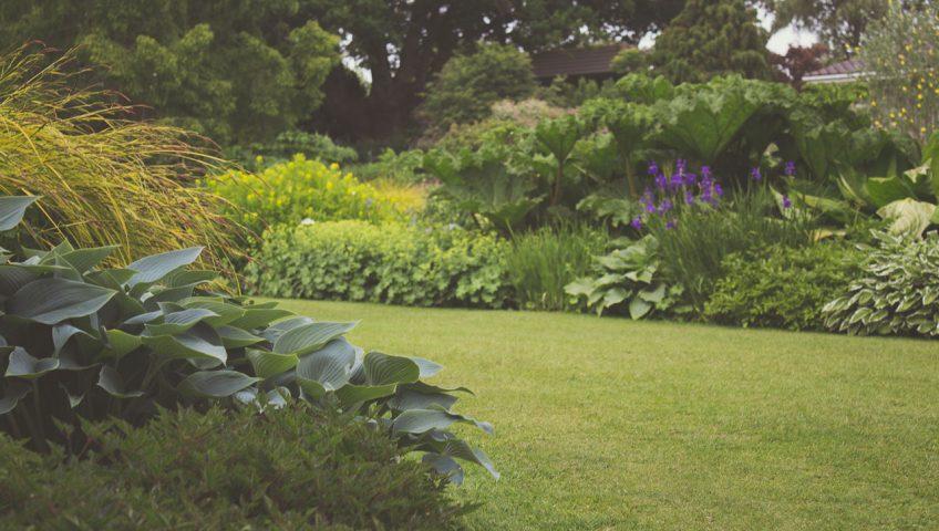 planten in een tuin die verzorging nodig hebben in de zomer