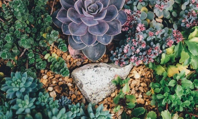 verschillende planten in een tuin laten plaatsen door hovenier
