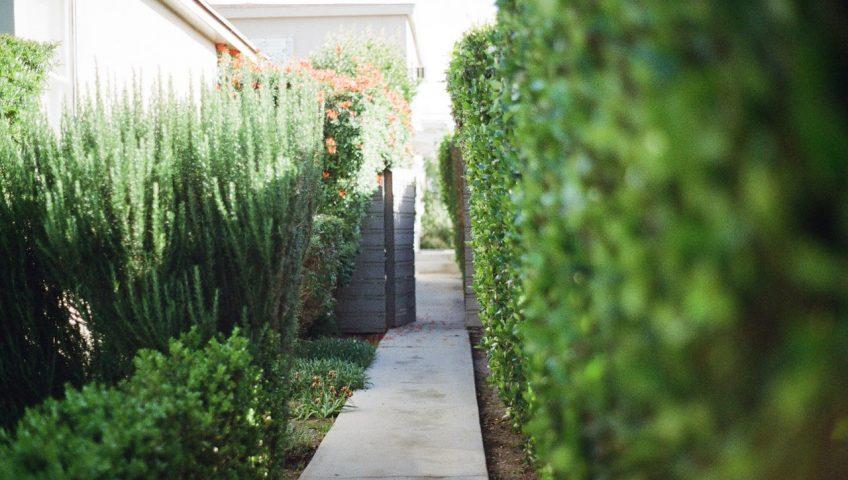 hoveniersbedrijf voor de aanleg van een tuin