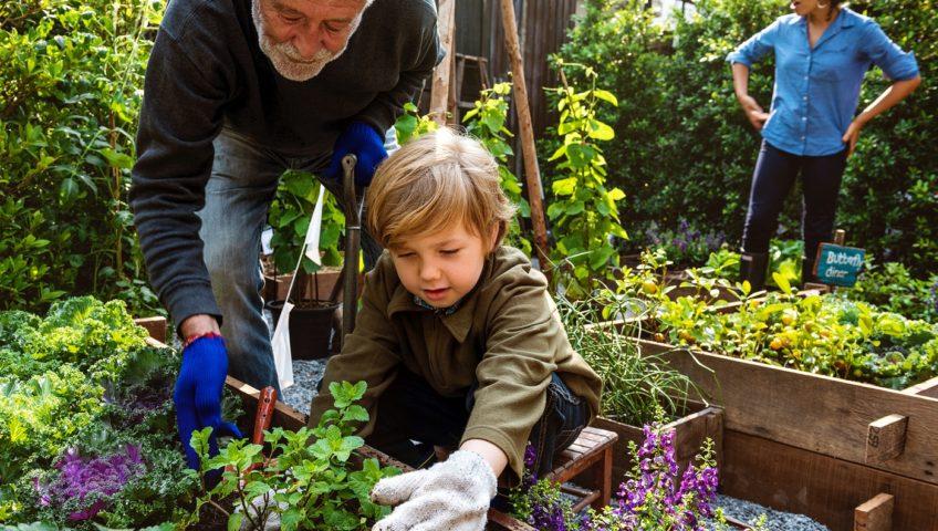 veel voorkomende fouten bij tuinonderhoud