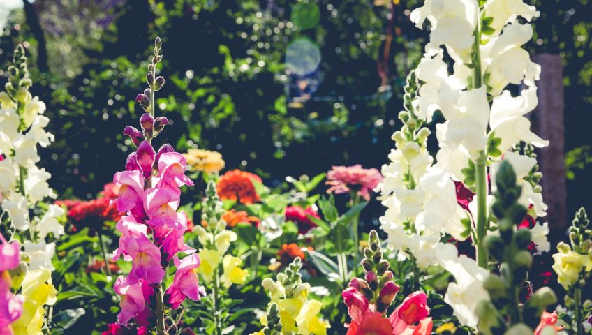 populaire lenteplanten